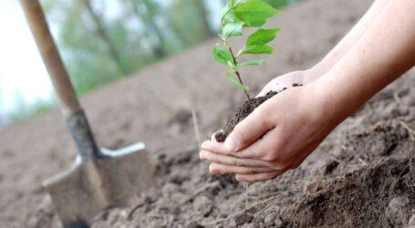 Україна встановила світовий рекорд з озеленення планети