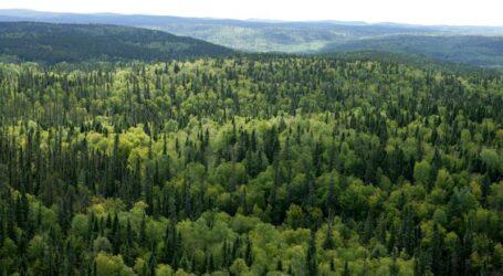 В Україні вперше проведуть Національну інвентаризацію лісів