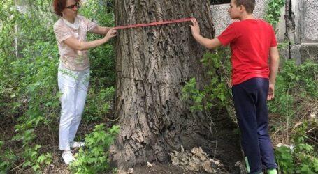 За збереження старих дерев виступають юні екологи в Кам'янському