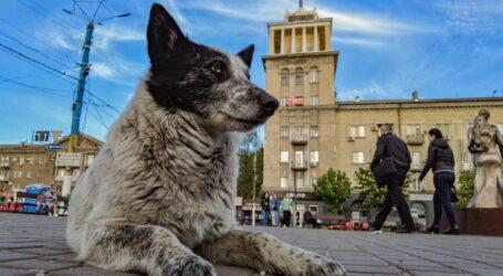 Пес, в якого 10 імен, вчить людей доброті в Кам'янському