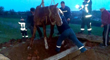 На Дніпропетровщині рятували коня