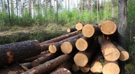 На Дніпропетровщині будуть ловити лісо-браконьєрів