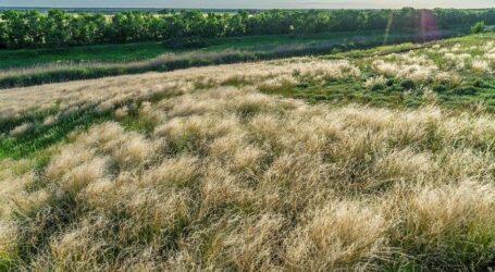 Дніпропетровщина розпродує природні заповідники