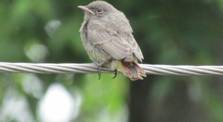 Що робити з пташенятами на вулицях Кам'янського