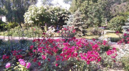 Розарій «ДніпроАзоту» – ботанічна родзинка Кам'янського