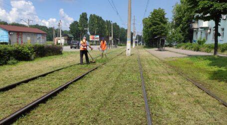 КП «Транспорт» проводить плановий покос карантинних трав