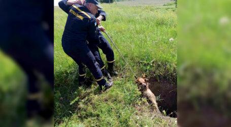 На Дніпропетровщині п'ятеро надзвичайників рятували безпритульного пса