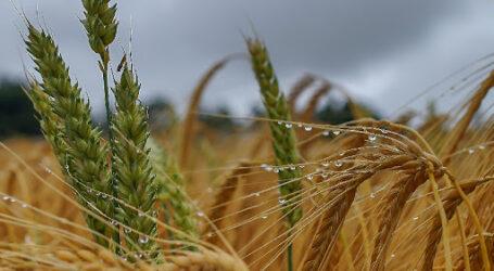 Тривалі зливи пішли на користь аграріям Дніпропетровщини