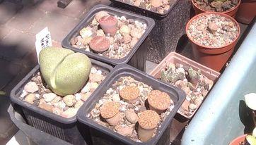 Рослини майбутнього демонструються в центральному парку Кам'янського - ФОТО