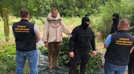 На Дніпропетровщині чоловік серед кукурудзи вирощував тисячі кущів коноплі