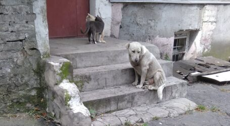 Людська реакція на собачу агресію в Кам'янському