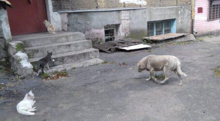 Що робити, аби тебе вкусив вуличний собака в Кам'янському