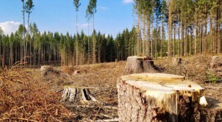 В Україні збільшать штрафи за екологічні злочини