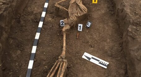 У Кам'янському знайшли рештки рядянського воїна