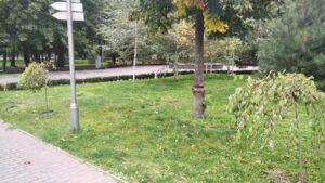 Другу спробу закласти в Кам'янському алею екзотичних рослин зробили бібліотекарі - ФОТО