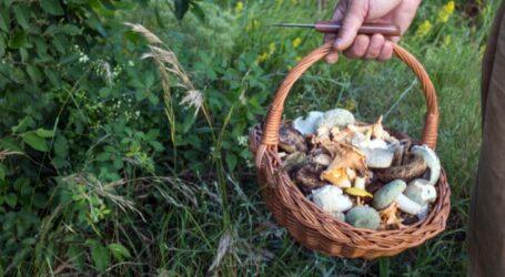В Україні почастішали випадки отруєння дикорослими грибами