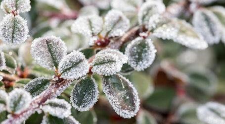 На Дніпропетровщині очікуються перші заморозки