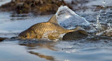 У Кам'янському обмежать вилов риби