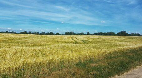 На Дніпропетровщині уклали понад 1,4 тисячі договорів на продаж земельних ділянок